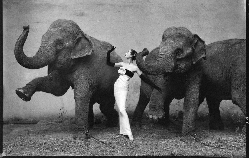 avedon-elephant-picture-1