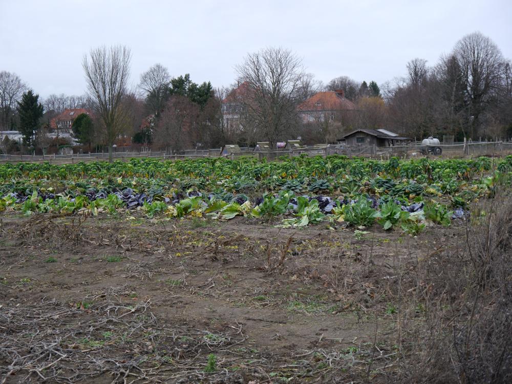 Landwirtschaftliche Flächen auf dem Landgut Domäne Dahlem