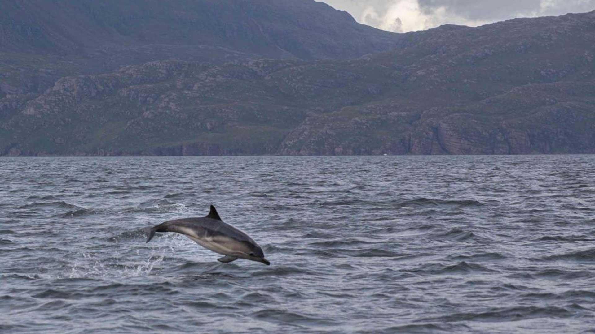 Delfin in freier Wildbahn. (Foto: Kristian)