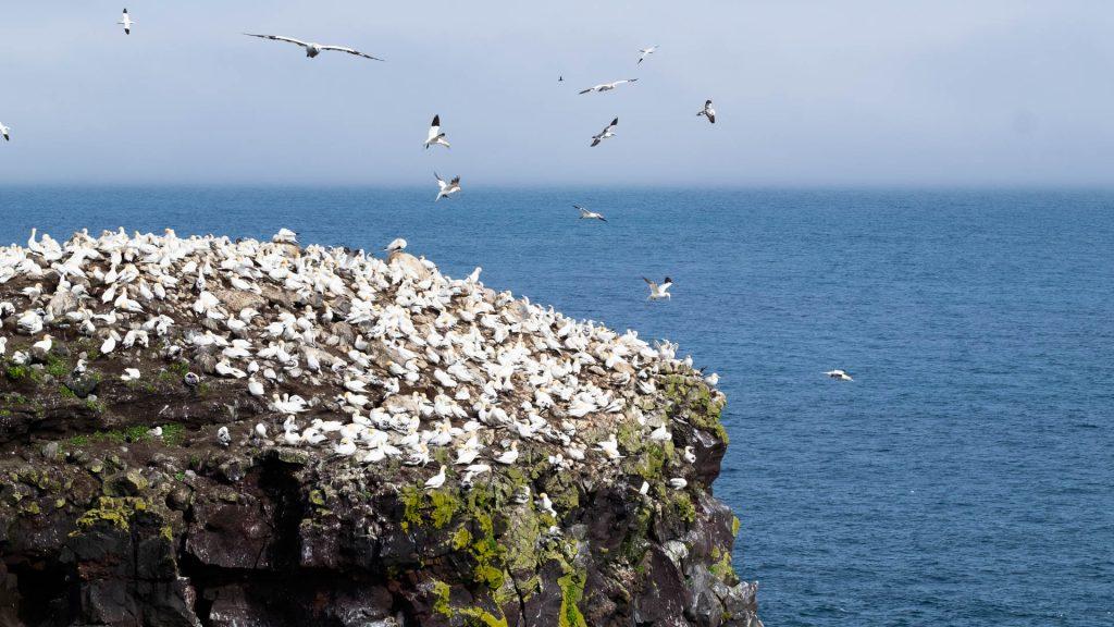 Vogelfelsen bei Raudinupur, ein kleiner Geheimtipp am Arctic Coast Way